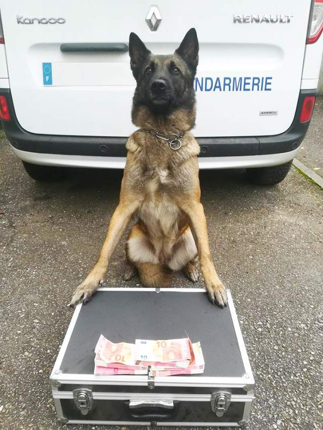 malinois detection billet de banque