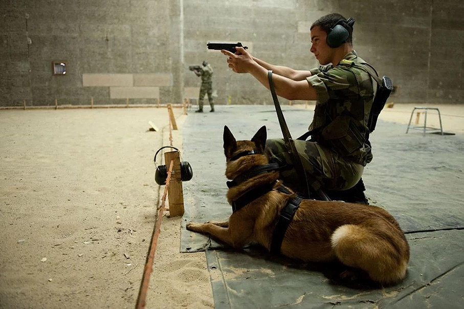malinois maitre chien armee